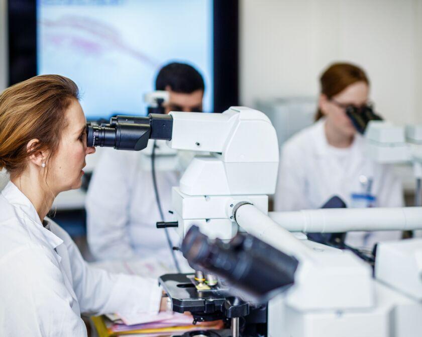 Mehrere Personen schauen durch verschiedene Mikroskope