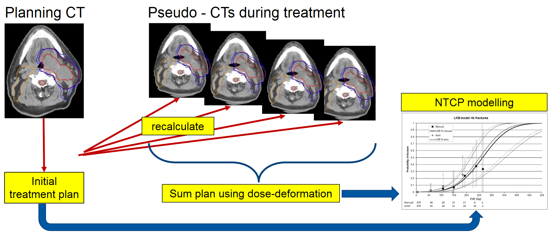 MRI Bilder