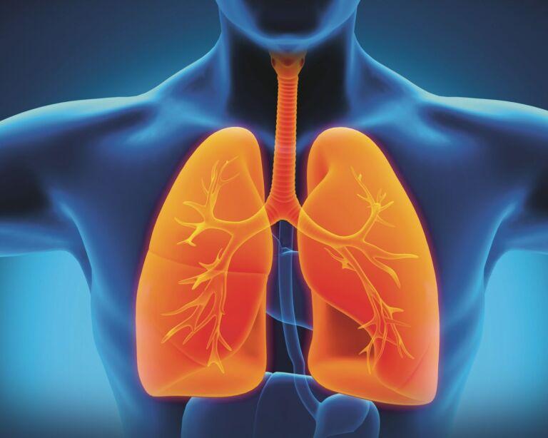 Illustration des Körperinneren mit Fokus auf die Lunge