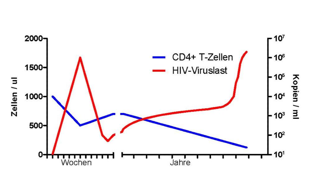 Vermehrung von HIV Diagramm