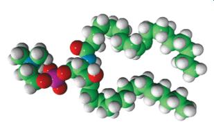 Illustration eines Sphingolipids
