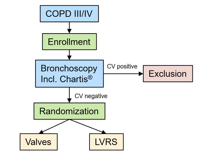 Ablauf der Studie dargestellt in einem Schema