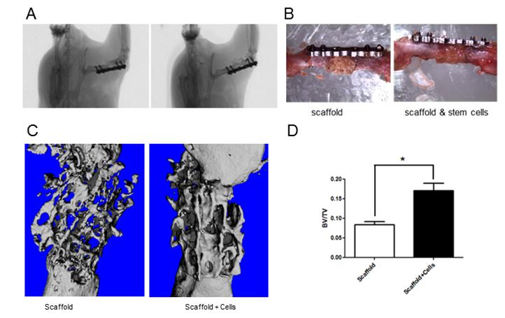 Stammzellen-Forschung