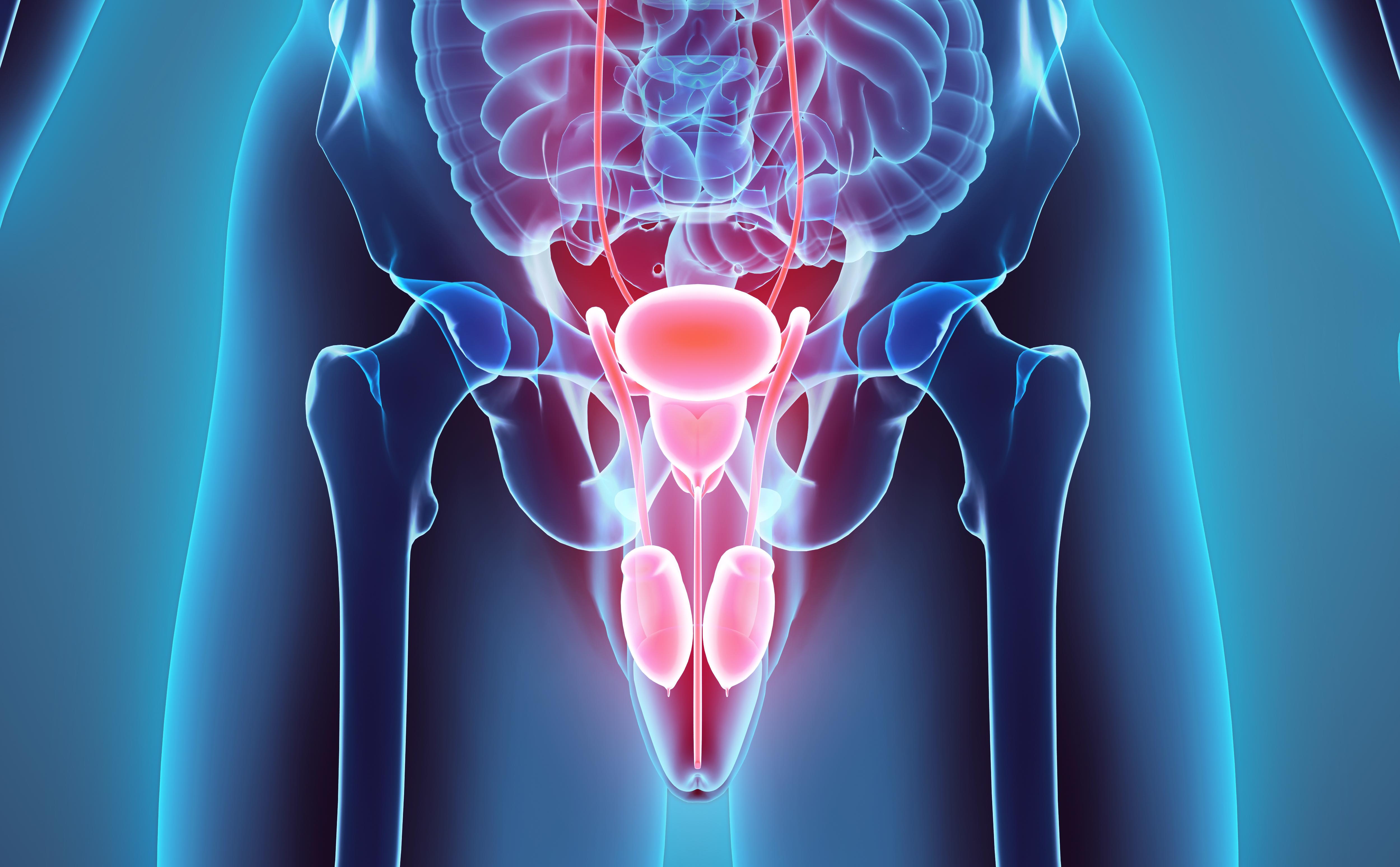 Betroffene Gebiete bei Harnröhrenkrebs illustriert
