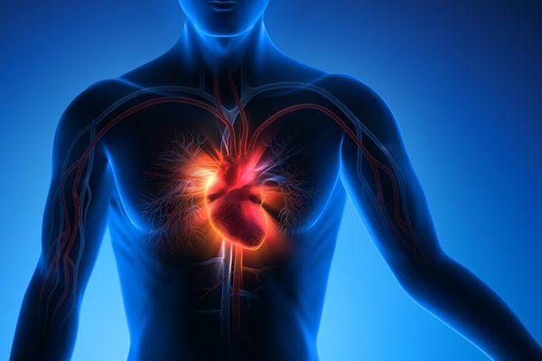 Abbildung des Herz in einem menschlichen Körper